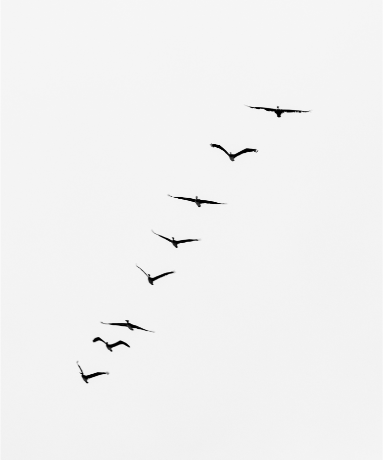ELEVAY freedom