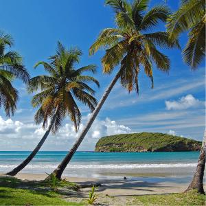 ELEVAY - Grenada